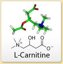 L Carnitine fumarate