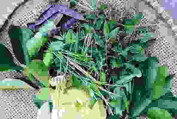 Bồ kết cùng vỏ bưởi kết hợp với cỏ mần trầu chữa rụng tóc 1